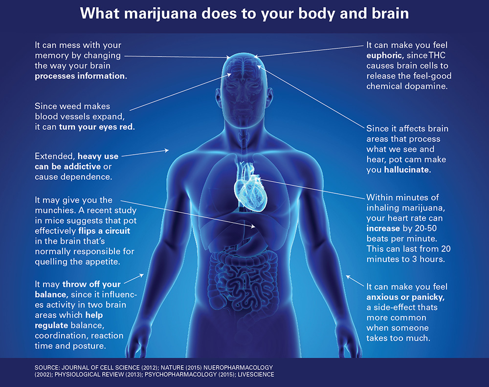 Weed And Work Cool Circuits Puts Your Brain Muscle To The Test They Have Relaxed Drug Testing It Makes Them Open Legal Liability When An Accident Happens Employee Involved Tests Positive For Marijuana