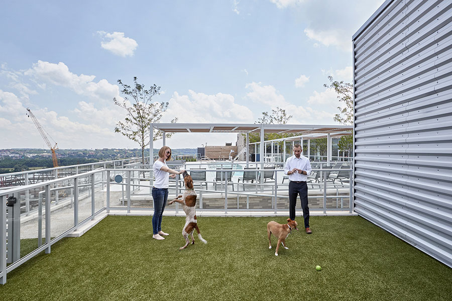 FIRST Residences rooftop dog park